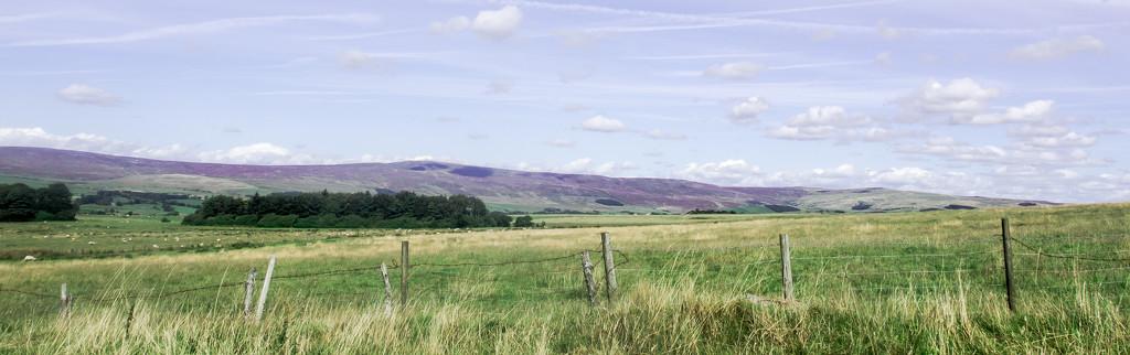 Purple hills  by happypat