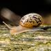 Snail - 25-08 by barrowlane