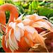 Ruffled Feathers by carolmw
