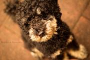 26th Aug 2014 - teddy #118