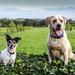 Dog day - 26-08 by barrowlane
