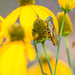 Yellow and Grashopper by tosee