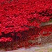 remembrance reflected by jantan