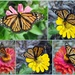 Breath of Beauty Collage by genealogygenie