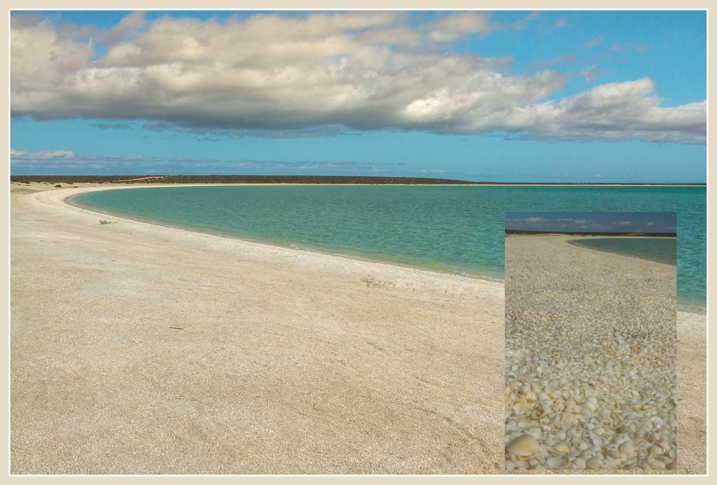 Shell Beach, Shark Bay, WA, World Heritage Site. by gosia