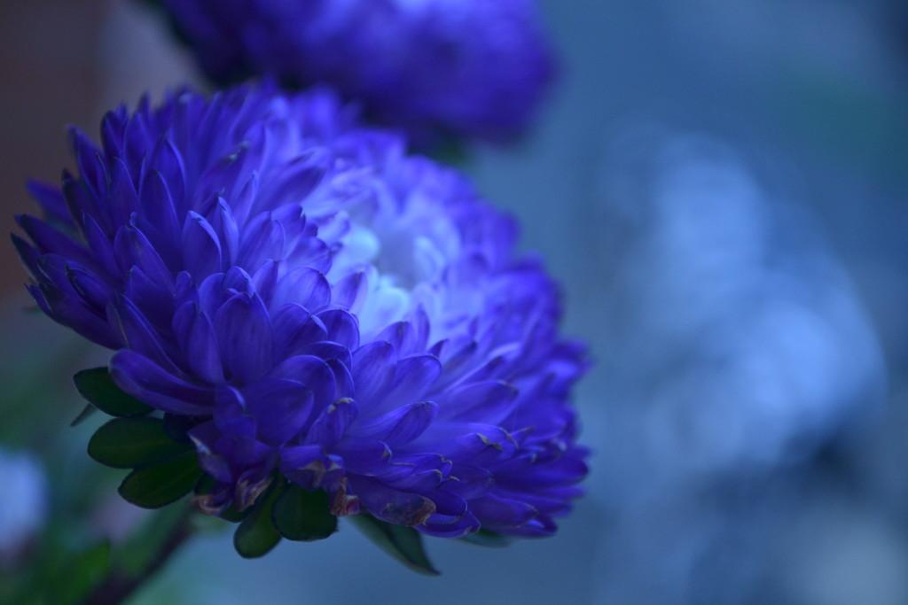 Blue Blue Blue ... by ziggy77