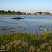 Chaffinch Island Park