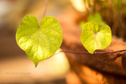 29th Aug 2014 - nature loves you #121