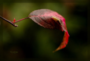 29th Aug 2014 - Hint of Autumn