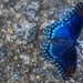 Am I Blue? by darylo