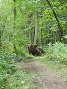 30th Aug 2014 - Woodland creature