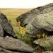 Prairie Stone by nanderson