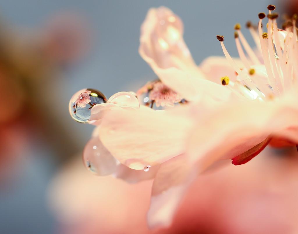 Springtime by abhijit