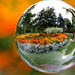 garden in a bubble by summerfield