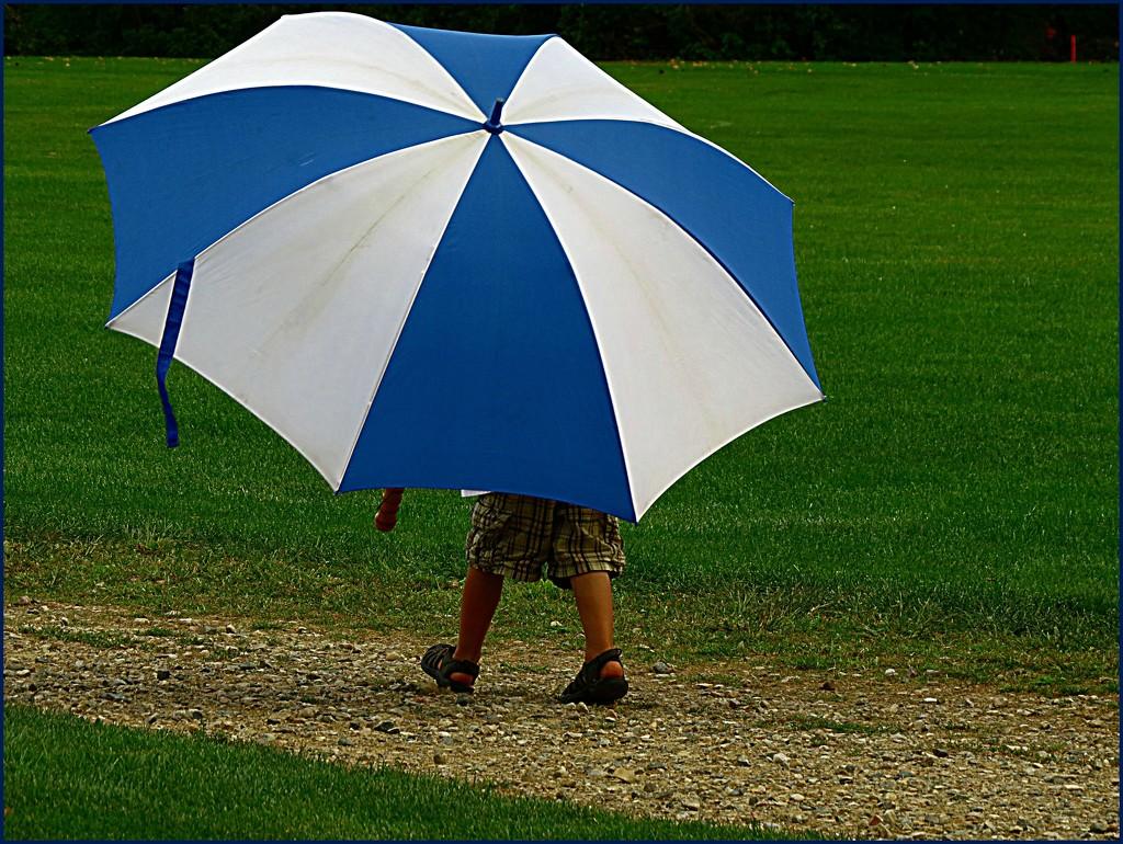 Umbrella by olivetreeann