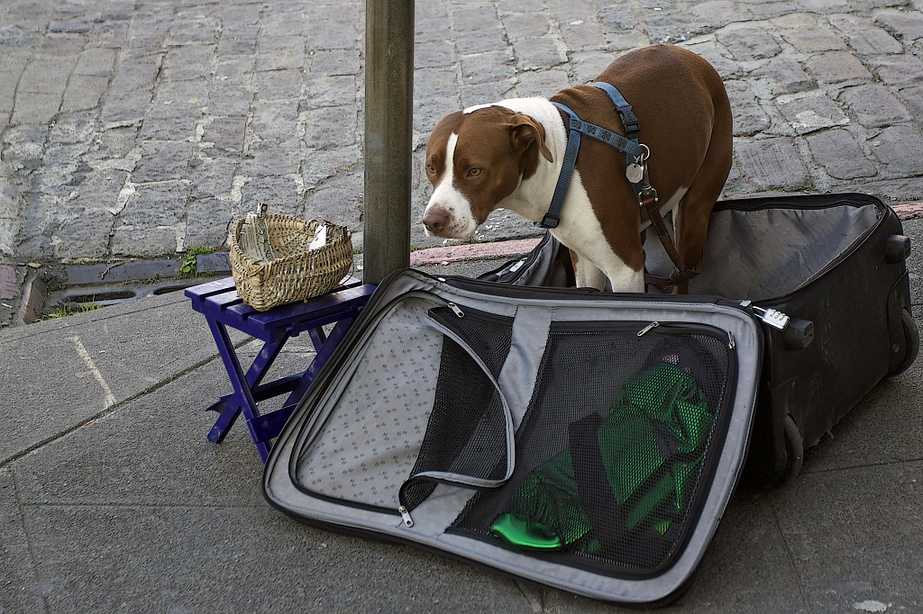The Dog is Hoping To Get Enough Money For a Trip by seattle
