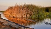 1st Sep 2014 - Wildlife Preserve