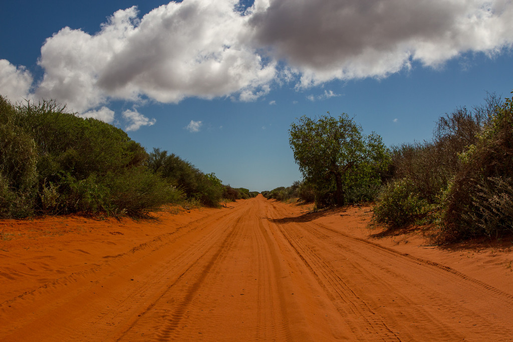 Outback track by gosia