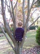 16th Oct 2010 - Just Sittin' in a Tree