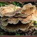 Fancy Fungi