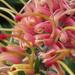 Twisty spring flowers by alia_801