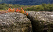 3rd Sep 2014 - Grit-stone growth