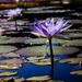 Garfield Park Conservatory #2 by ukandie1