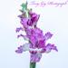 Gladioli by tonygig