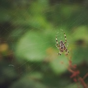 4th Sep 2014 - Spider