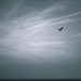 The sea and the sky and the gull by overalvandaan