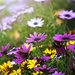 Yellow & Purple Daisy Patch by teodw