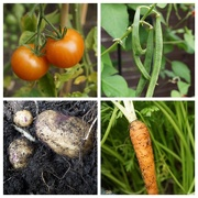 6th Sep 2014 - Vegetables (and fruit) from the garden