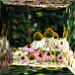 cone flower mirror box by summerfield