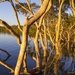 Mangroves in the sunlight