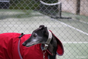 6th Sep 2014 - 20140906 - George was very disappointed that tennis was cancelled for the day