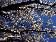 7th Sep 2014 - Spring has sprung