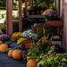 Fall has come to my veggie stand on 365 Project