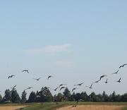 29th Jul 2014 - summer field