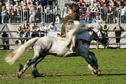 6th Sep 2014 - Fell Pony