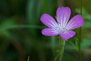 8th Sep 2014 - Just another flower