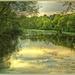 Evening Light by carolmw