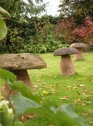 18th Oct 2010 - Giant mushrooms !!