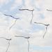 Flock of Forks