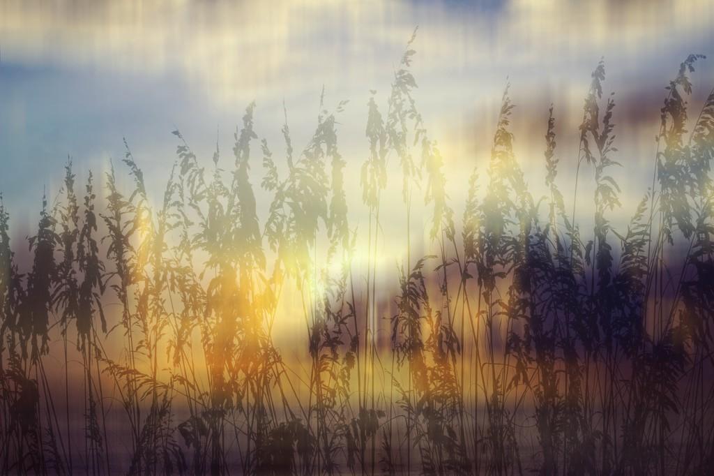 Morning sunshine by joemuli