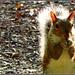 A Squirrel's Prayer by olivetreeann