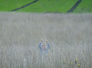 18th Oct 2010 - Wildlife Photography