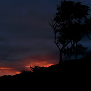 4th Sep 2014 - Silhouette trees
