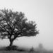 Solitude by aecasey