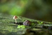 3rd Sep 2014 - Tiny shroom