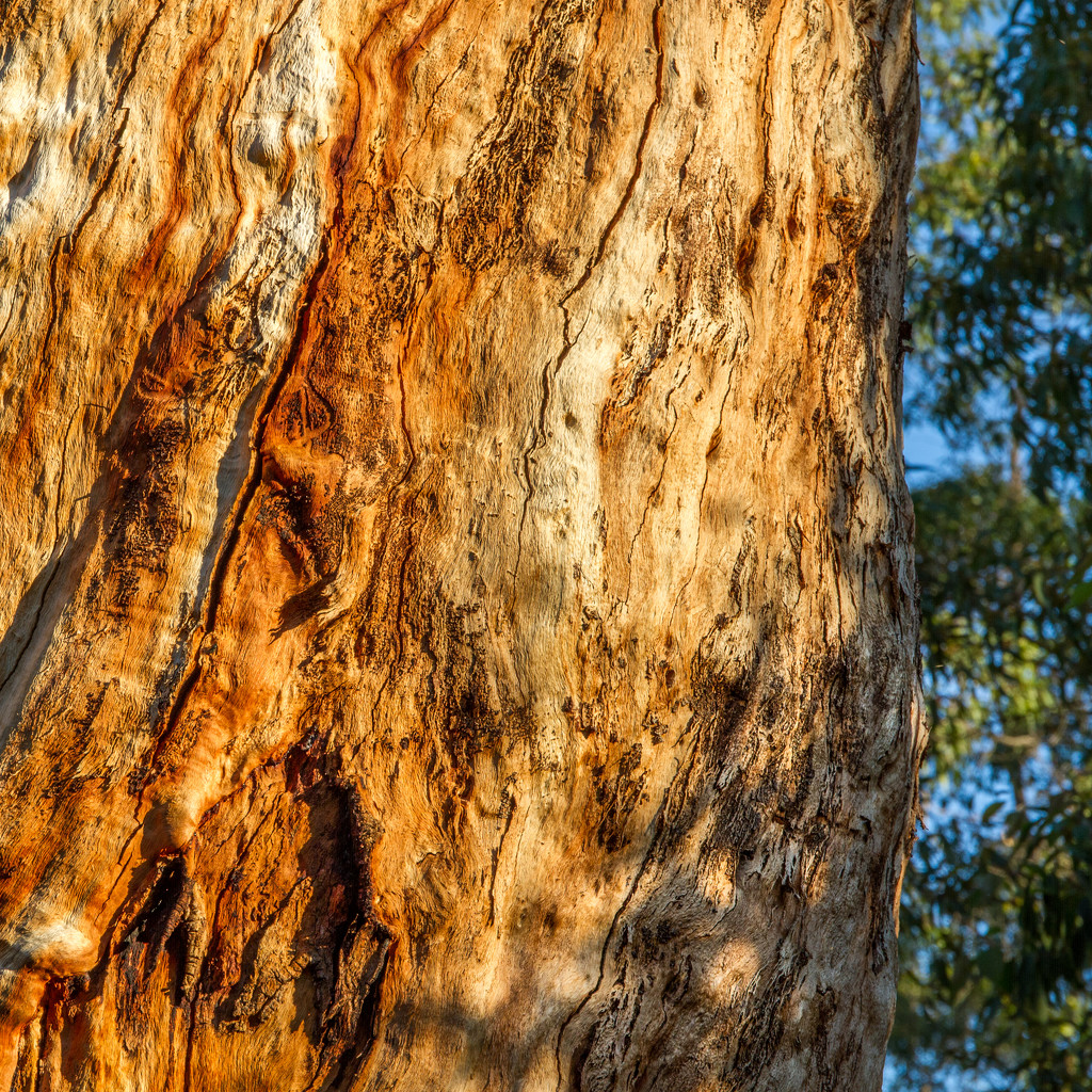 Trunk at sunset by gosia